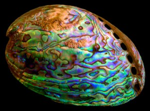 Paua Abalone shell - Marta Howell Jewelry Information